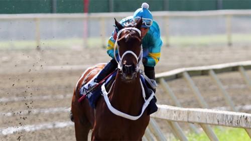 caballo bambera