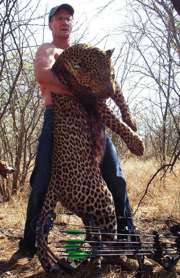 a matado casi 50 animales en peligro de extincion