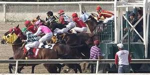 caballo partida
