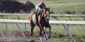 caballo III
