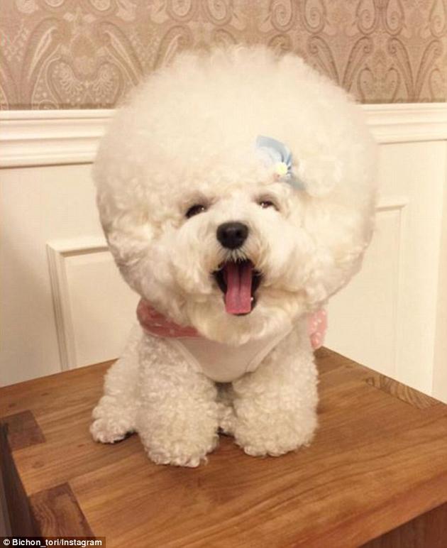mejor estilo perrito
