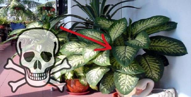 Tiene esta planta en su hogar esta planta en el hogar for Plantas en el hogar