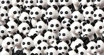 ¿Aceptas el reto? ¿Podrías ubicar en 8 segundos el perrito entre todos estos osos pandas?