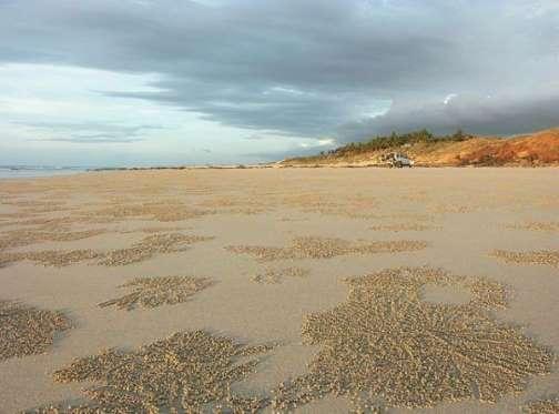 Cable Beach Y nos vamos de nuevo a Australia. Y hacemos parada en Cable Beach, una playa que parece sacada de un catálogo de viajes. No puede ser más perfecta en. Agua que parece insuflar vida y una arena fina y blanca tocada por dioses. Un paraíso en el que pasar, como te descuides, tus últimos días. ¿El problema? Uno bastante grande: los cocodrilos de agua salada. Eso sí, las autoridades australianas no se andan con milongas y mantienen cerrada la playa durante gran parte del año. De hecho, no ha habido que lamentar muertes. De momento.