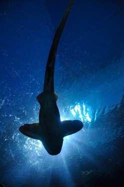 Smyrna Beach Y si en Isla de Reunión hay tiburones, no digamos en Smyrna Beach. Esta playa, situada en pleno Florida, tiene el dudoso honor de contar con el mayor número de ataques de tiburones del mundo. Hablamos de... ¡80 ataques al año! Muchos de ellos, con resultado de muerte. Cómo será la cosa, que la leyenda dice que todo el que ha pasado por Smyrna Beach, ha estado a menos de tres metros de un tiburón. Aunque no lo sepa.