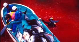 matanza de delfines en japon