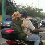 Super perro motorizado