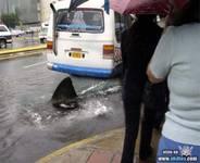 Tiburon callejero