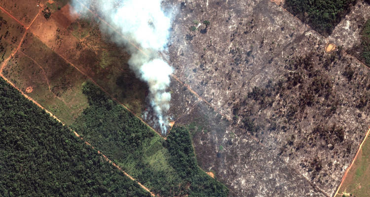 LOS INCENDIOS EN LA AMAZONIA SON PRODUCIDOS POR LA EXPANSIÓN DE LA AGRICULTURA