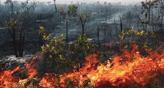 Se quema la Amazonía