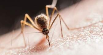 MALARIA EN VENEZUELA ESTADISTICAS DE LA OPS
