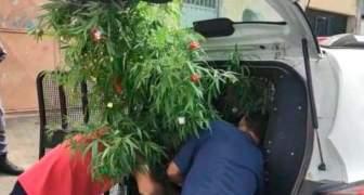 Árbol de Navidad de marihuana