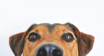 La OMS Confirma que las Mascotas No Trasmiten el COVID-19
