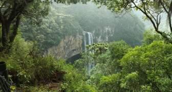 La pérdida de bosques se ralentiza en América del Sur y las áreas protegidas aumentan