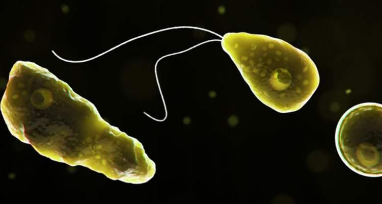 amoeba comecerebros U.S. Department of Health & Human Services . CDC