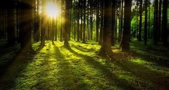 Los bosques de América Latina y el Caribe